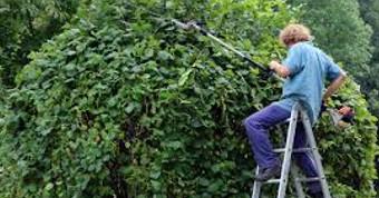 Садовник стрижет большое дерево