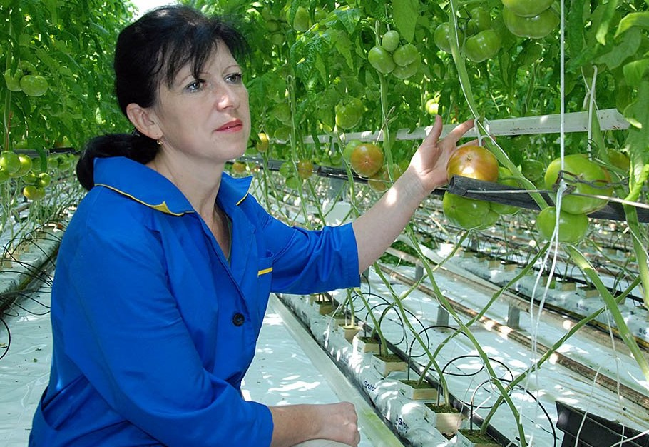 Женщина сидит возле грядки с помидорами