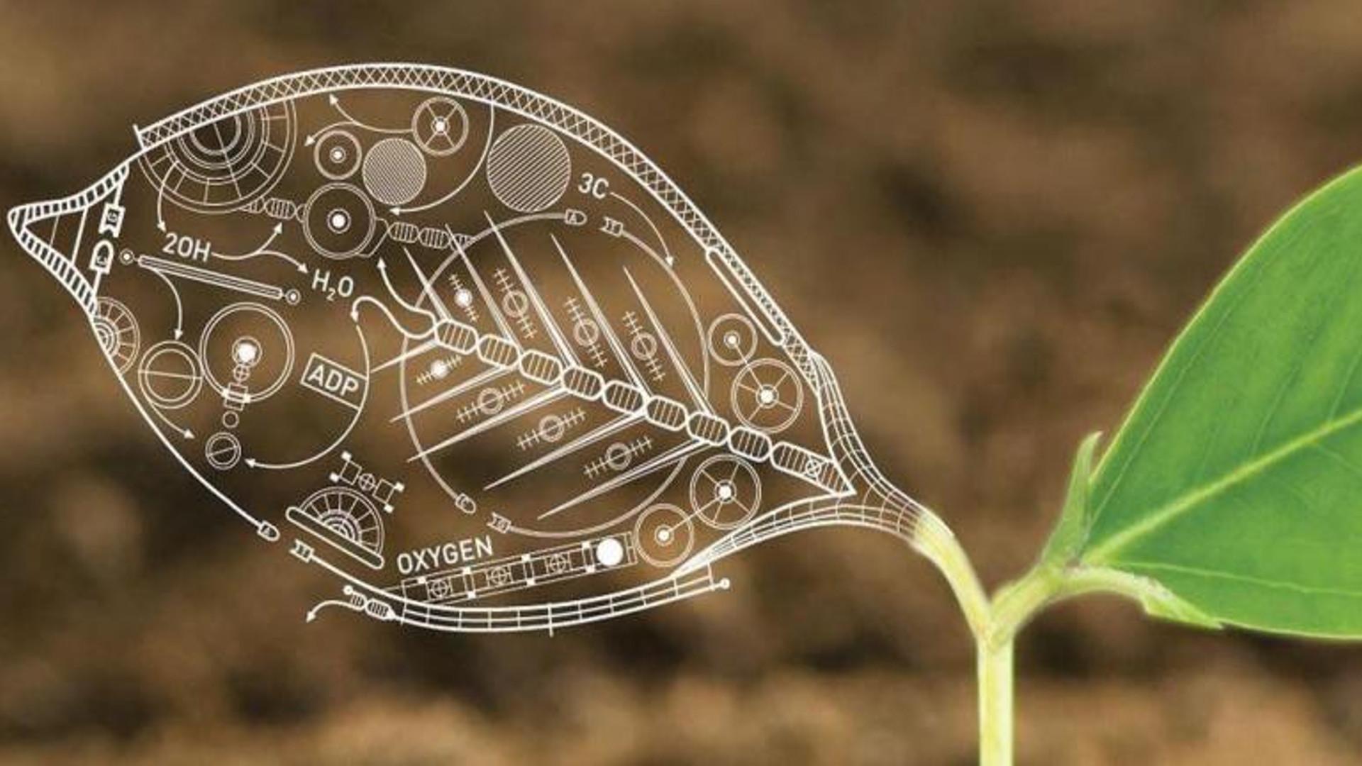 Биологические формулы на листе растения