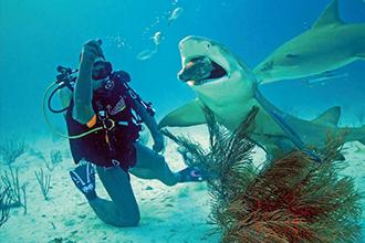 Океанолог и акула