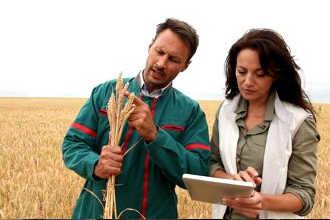 Агрономы на пашне изучают пшеницу