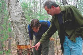 Студенты на практических занятиях по экологии
