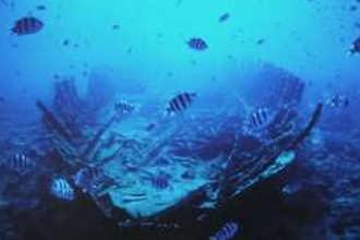 Рыбы на глубине океана