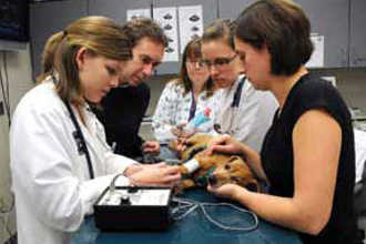 Обучение ветеринарии на практике