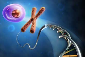 ДНК, яйцеклетка и хромосомы