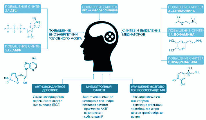 Воздействие препаратов на мозг