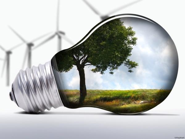 Электрическая лампочка, в которой отражается дерево